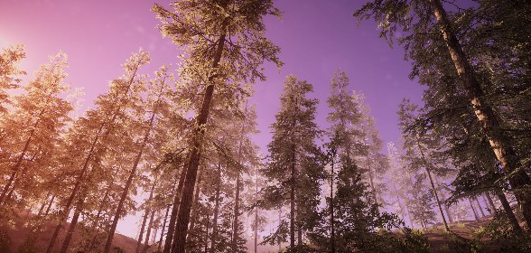 More forest scenery